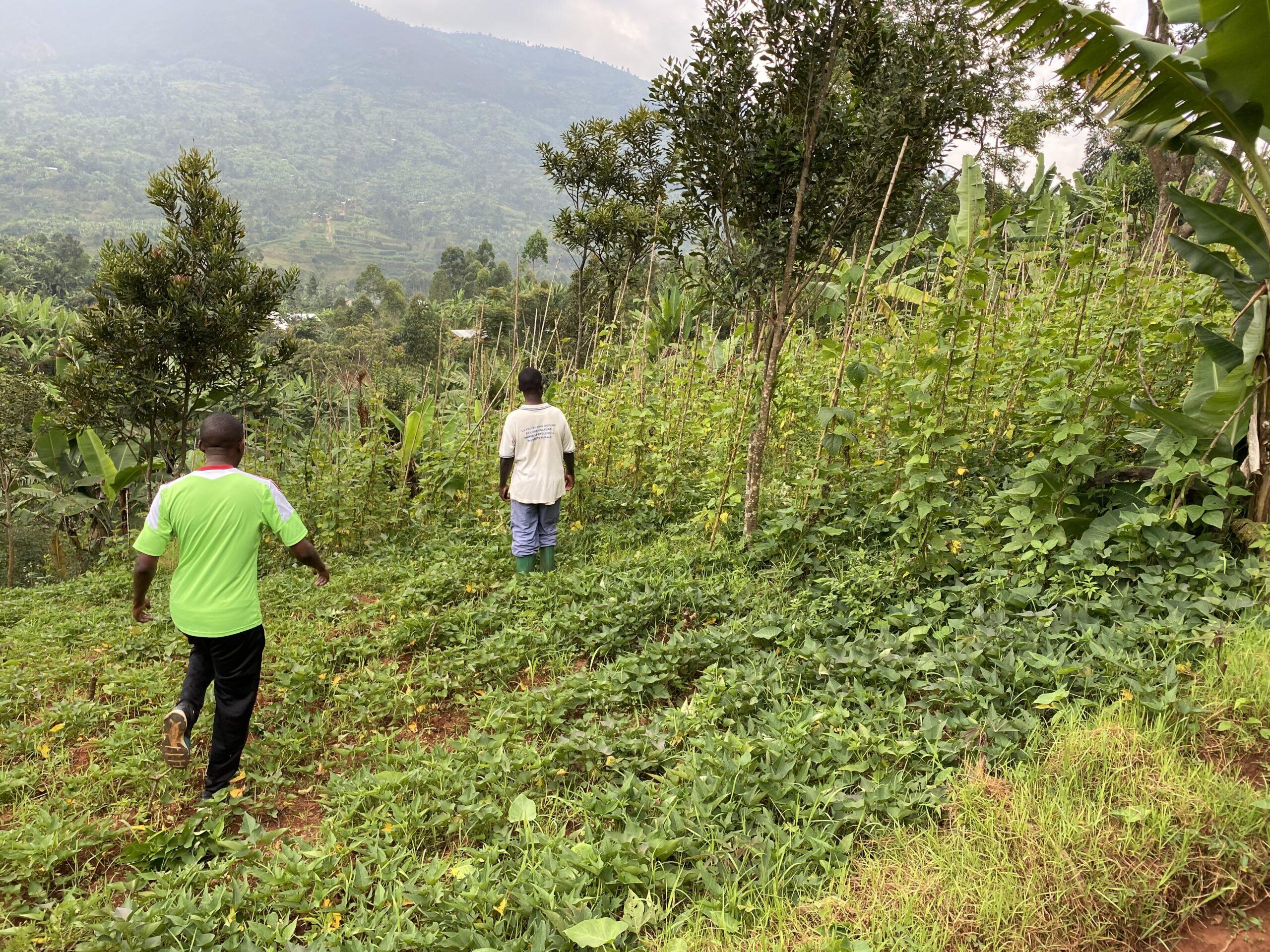 Burundi, aree di applicazione del biochar